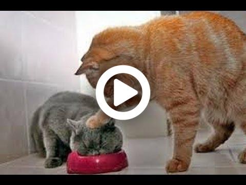 beliebte chat seiten Esslingen am Neckar
